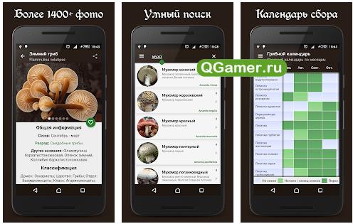 Лучшие приложения на Android для заядлых грибников